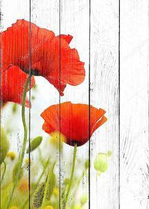 Маки полевые цветы