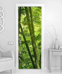 Азиатский бамбуковый лес с утренним солнечным светом