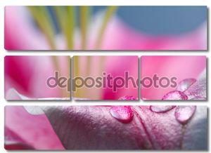 Аннотация фото лепесток с росой