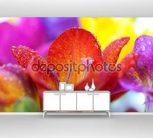 Цветы макро Крокус