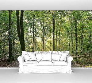 Осенний рассвет в волшебном лесу