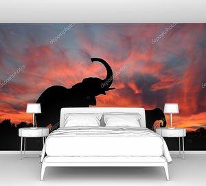 Слоны наслаждаться впечатляющий закат на Серенгети