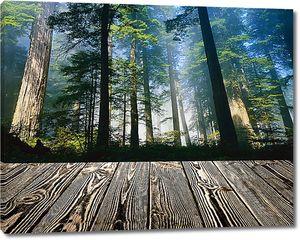 Лес в тумане с мостков
