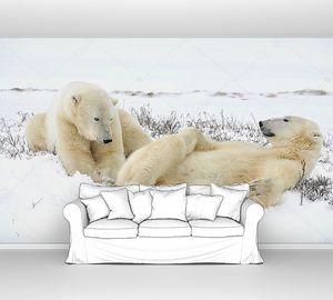 Два белых медведя отдыхают