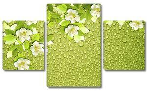 Цветки жасмина с каплями росы