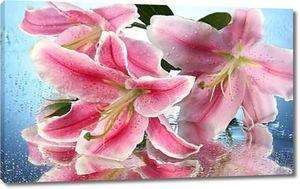 Красивая розовая лилия, на синем фоне