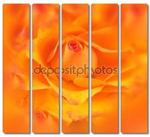 Colse вверх желтый и оранжевый роз