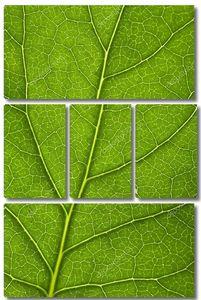Макрос свежих листьев