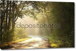 Сельские Лейн в осеннем лесу на рассвете