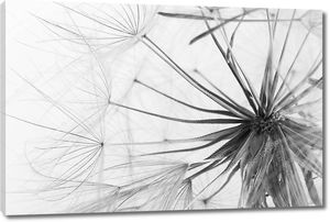 Семена одуванчика голову на сером фоне, закройте. Черный и белый эффект
