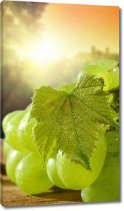 Сочный виноград с листочками