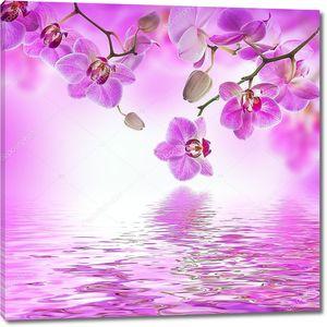 Тропических орхидеи склонились над водой