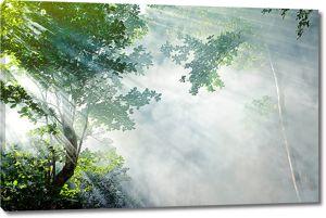 Солнечные лучи сквозь туманную дымку