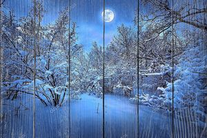 Лунная ночь в зимнем лесу