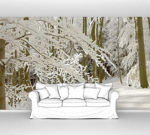 Солнечный зимний лес