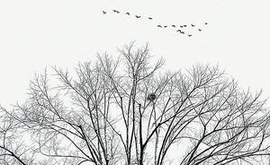 Гнездо в ветвях