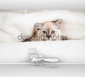 Котенок в одеялах