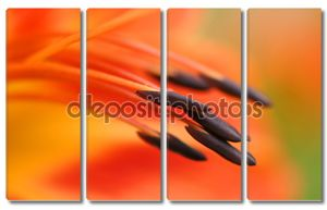 Макрос тычинки оранжевые лилии