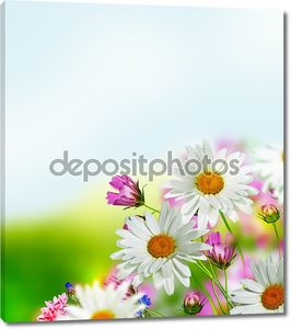 Цветы космос и васильки на фоне голубого неба с
