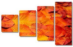 Осенние листья красные желтые, сфотографировали в студии. extraordin