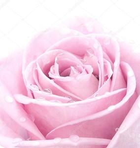 розовый повысился