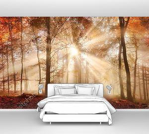 Лучи солнечного света в туманный осенний лес