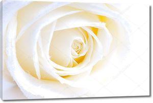 Абстрактный белые розы макро