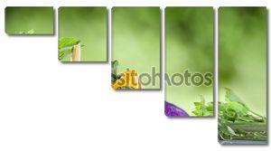 Крупным планом зрения Ницца свежие овощи на зеленый летом обратно