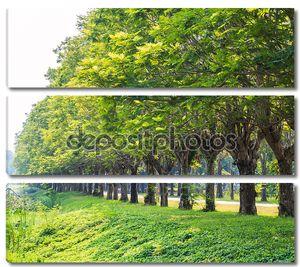 Строка стволов деревьев