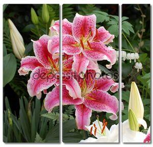 Три Лилейники в саду