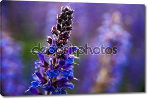 Цветы лаванда в макро фотографии на закате свет.