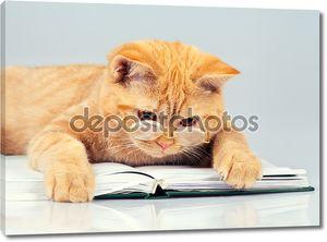кошка, изнашивающаяся очки, читая книгу