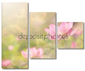 Цветы лотоса в саду