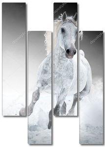 Белая лошадь бежит Галоп в зимний период