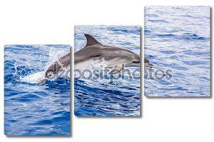 Дельфин выныривает из воды