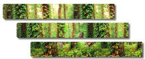 Заросший лианами лес