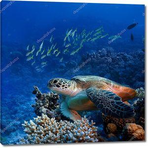 Большая черепаха под водой