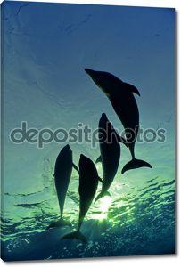 Плавание с дельфином семьи