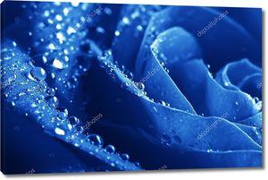 Крупным планом Beautiul синий Роза с каплями воды