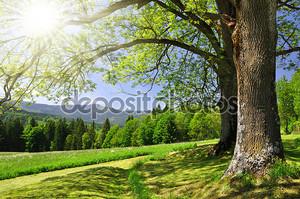 Весенний пейзаж в национальном парке Шумава