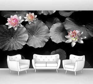 Лотосы в черно-белом