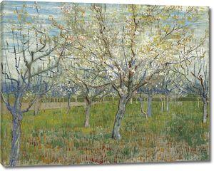 Ван Гог. Фруктовый сад с цветущими абрикосами
