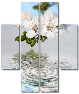 Весенние цветы дерева бранч