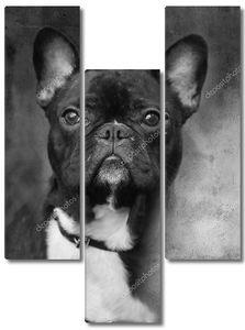 BW собака