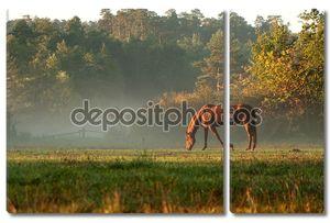 Лошади на лугу туман утром