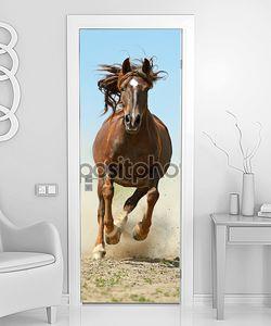 лошадь, спешащая в галопе