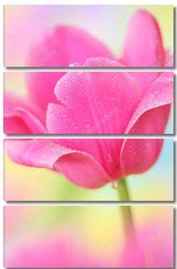 Цветок яркого тюльпана