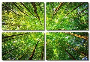 Деревьев кроны
