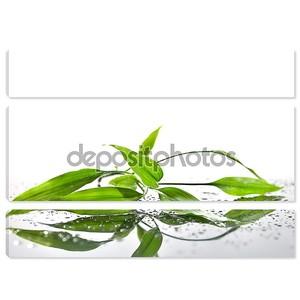 Спа фон с бамбуком и воды