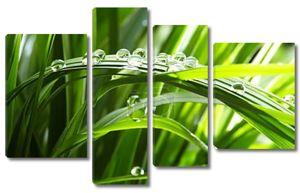 вода понижается на зеленой траве